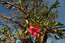 11-elephant-tree-omo-valley-ethiopia